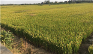 极飞R150农业无人车面市,拓宽无人化农业场景